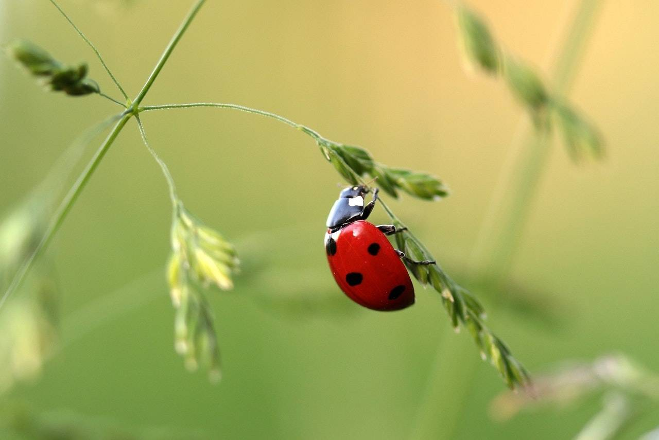 Ladybug Signs From The Universe