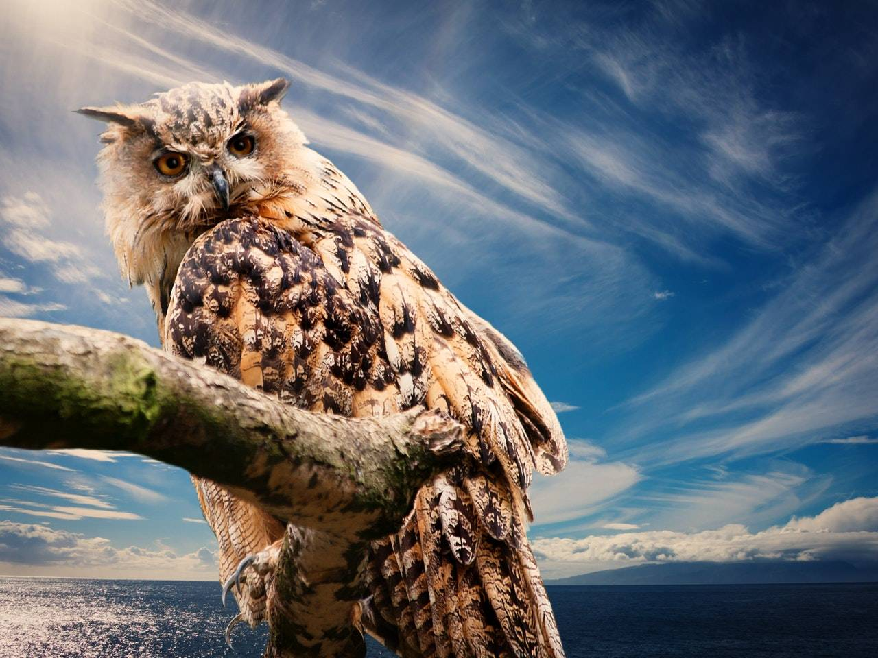 Owl Signs From The Universe